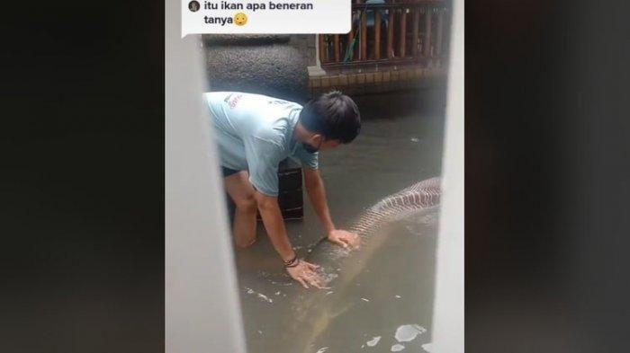 Viral ikan berukuran besar sekira 2 meter.