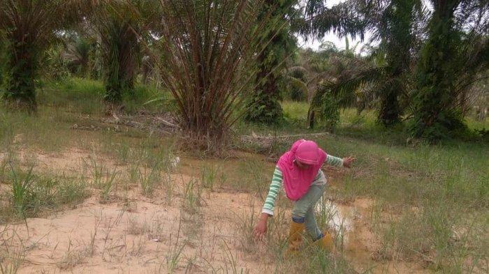 Jalankan Instruksi Presiden, Pemprov Riau Tunda Perizinan Perkebunan Kelapa Sawit di Riau