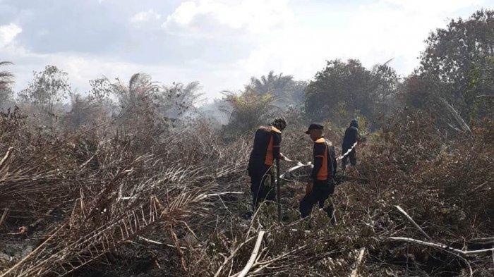 Karhutla di Riau, Sepanjang Januari 2020 Total Luas Lahan Terbakar Capai 78 Hektare, Ini Rinciannya