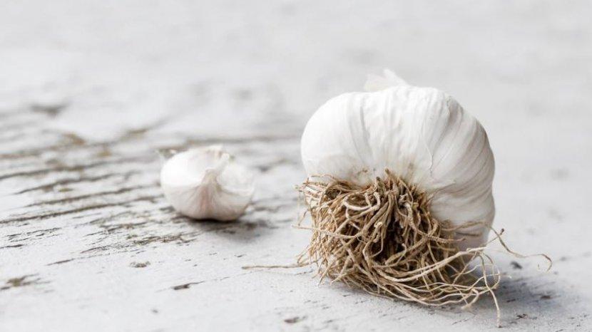 bawang-putih-bisa-untuk-mengobati-panu.jpg