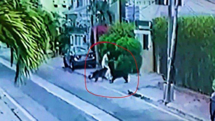 foto-dua-ekor-menyerang-seorang-pengacara-di-karachi.jpg