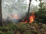 5-ha-lahan-diduga-dalam-kawasan-hutan-di-penyasawan-terbakar.jpg