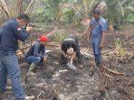 ah_jadi_tersangka_kebakaran_hutan_di_riau_diciduk_setelah_10_hektar_lahan_di_inhil_hangus.jpg
