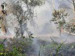 asap-di-lokasi-karhutla-pelalawan.jpg