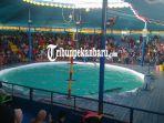 atraksi-lumba-lumba-di-pekanbaru-dapat-penolakan-pecinta-satwa-ini-kata-pengelola-acara.jpg