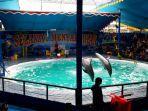 atraksi-lumba-lumba-di-pekanbaru.jpg
