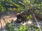 bayi-gajah-diselamatkan_20171217_102901.jpg