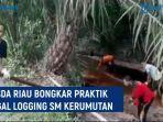 bbksda-riau-bongkar-praktik-illegal-logging.jpg