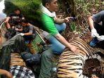 bbksda-riau-evakuasi-harimau-sumatera-yang-terjerat-di-konsesi-hti-begini-penjelasan-pt-rapp.jpg