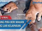 beri-makan-kucing-kelaparan.jpg