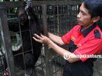 beruang-madu-dan-satwa-langka-lainnya-direhabilitasi-di-kantor-bbksda-riau_20171004_152137.jpg