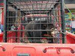 beruang-madu-yang-disita-polisi-dari-salah-satu-keluarga-di-pelalawan.jpg