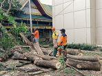 bpbd-inhil-evakuasi-pohon-tumbang.jpg
