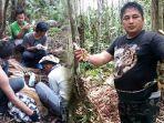 breaking-news-harimau-sumatera-yang-terjerat-di-konsesi-hti-pt-rapp-dievakuasi-ke-prhsd-sumbar.jpg