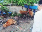 bupati-inhil-hm-wardan-menyaksikan-proses-pemotongan-hewan-qurban-di-halaman-masjid-al-ghulam_20180823_133538.jpg