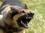 digigit-anjing-rabies-anak-meninggal_20180322_195141.jpg