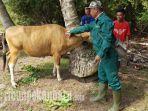 dinas-pertanian-bengkalis_20181018_224353.jpg