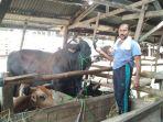 fathullah-memperlihatkan-sapi-asal-lampung-seberat-1375-ton_20180820_155625.jpg