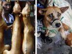 festival-makan-daging-anjing-di-china.jpg
