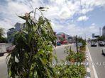 foto-pupr_kota_pekanbaru_polisikan_perusakan_puluhan_pohon_di_jalan_tuanku_tambusai_2.jpg