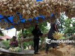 foto_ketupat_daun_kapau_ketupat_khas_masyarakat_melayu_pesisir_2.jpg