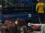 foto_panen_kelapa_sawit_di_pekanbaru_kebun_sawit_3.jpg