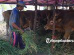 foto_pedagang_hewan_kurban_mulai_bermunculan_di_pekanbaru_1.jpg