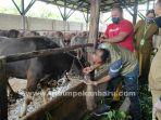 foto_pemeriksaan_kesehatan_hewan_kurban_di_pekanbaru_2.jpg