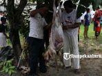 foto_pemotongan_hewan_kurban_di_rumbai_pesisir_pekanbaru_berlangsung_lancar_4.jpg