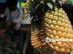 foto_penjualan_nanas_di_pekanbaru_meningkat_seiring_dekatnya_idul_fitri_3.jpg