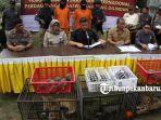 foto_penyelundupan_singa_leopard_dan_orangutan_digagalkan_di_pekanbaru_4.jpg