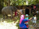 gajah-di-taman-kota_20160809_130801.jpg
