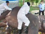 gajah-sumatera-yang-mati-di-kebun-binatang-kasang-kulim.jpg