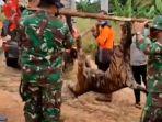 harimau-sumatera-mati-mengenaskan-terkena-jerat-di-bengkalis-riau.jpg
