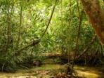 hutan-larangan-kampar_20180503_105020.jpg