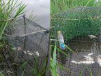ikan-mengapung-di-atas-sungai-kerumutan-pada-rabu-2122018-lalu-ikan-ikan-itu-mati-mendadak_20180223_174357.jpg