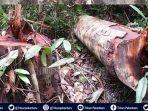 ilegal-logging-di-taman-nasional-tesso-nilo-hingga-banjir-di-desa-lubuk-kembang-bunga-pelalawan.jpg