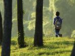 ilustrasi-anak-hilang-hutan-hiking_20160530_134418.jpg