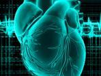 ilustrasi-urat-darah-serangan-jantung_20160309_105102.jpg
