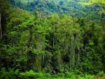 ilustrsai-hutan-belantara_20151110_192021.jpg