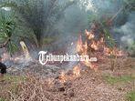 karhutla-seluas-223-hektar-hutan-dan-lahan-terbakar-di-bengkalis-bpbd-minta-bantuan-water-bombing.jpg