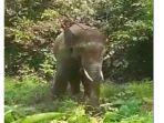 kawanan-gajah-sumatera-merusak-kebun-warga.jpg