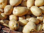kentang-kentang.jpg