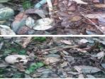 kerangka-tulang-manusia-desa-tarai-bangun_20160628_115523.jpg