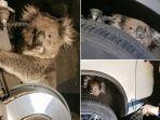 koala_20170918_104035.jpg