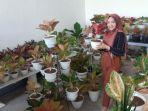 koleksi-tanaman-hias-aglonemanya.jpg