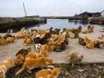 kucing-kucing-liar-di-pulau-aoshima_20170419_001854.jpg