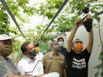 langka-gubernur-riau-syamsuar-panen-anggur-hasil-budidaya-komunitas-pengagguran.jpg