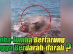 lumba-lumba-menggelepar-di-pantai-bali.jpg