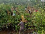 masyarakat-sedang-melakukan-penanaman-bibit-mangrove-di-desa-kepau-baru.jpg